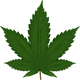 cannabis-306291_960_720.png