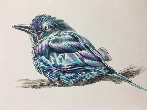 Blue Bird 2- $150