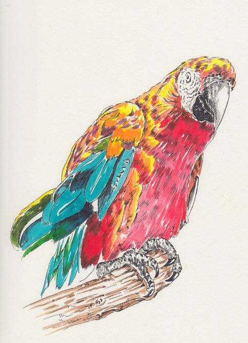 Parrot $150