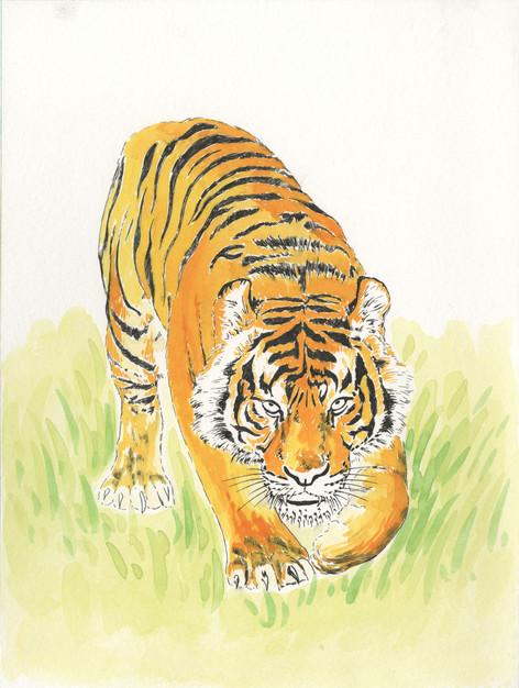 Tiger-$150