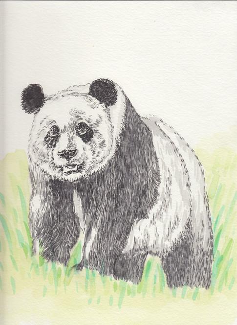 Panda-$150