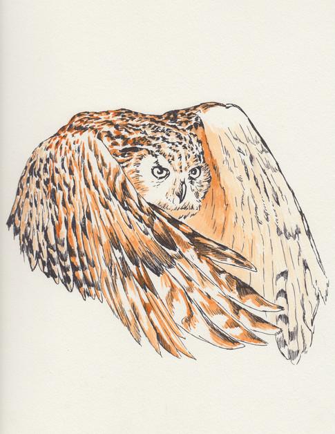 Owl-$150