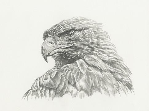 Eagle-$150