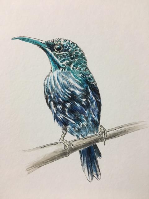 Blue Bird 1-$150