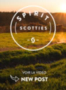 SPIRIT SCOTTIES - story new post.jpg