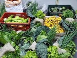 Repolhão verduras e legumes -.-.