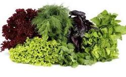 Repolhão verduras e legumes - alface  ..