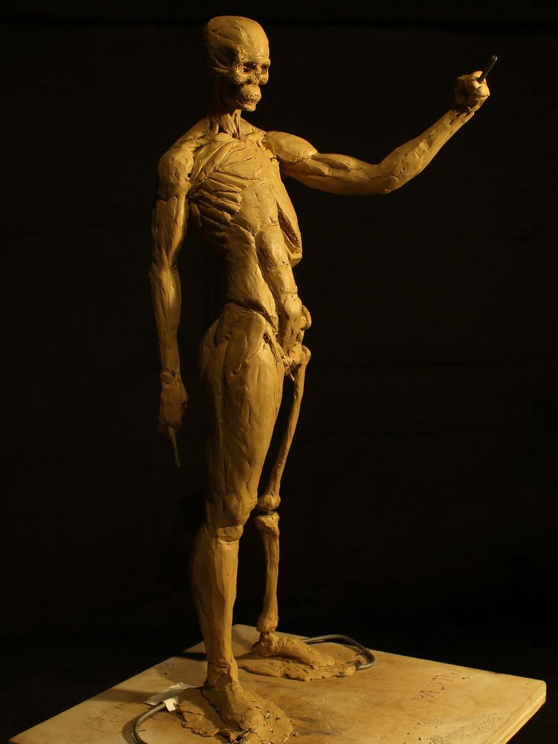 Anatomical Study 1