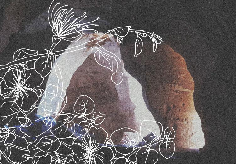 holy flower - capparis spinoza.jpg