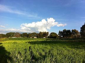 Rancho Amalias