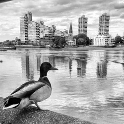 Best view in the house #thamesriver #river #waterfront #london #londontown #monochromemavens #candid