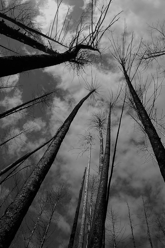 Death of the Forest