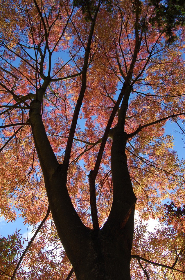 Autumnul