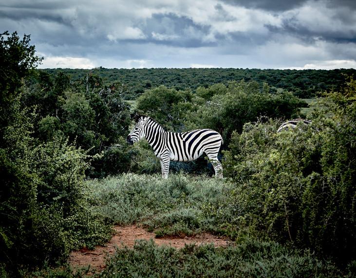 150421_southafrica_0052.jpg