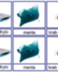 6 Morske zivocichy.jpg