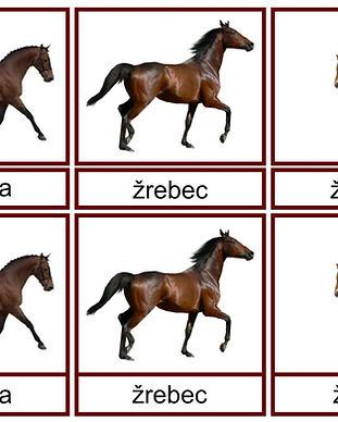 2 Domace zvierata.jpg