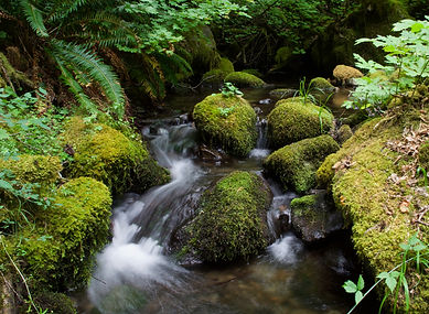 Upper RNA Creek (1).jpg