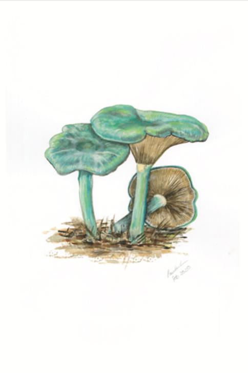 The Blue Toadstool, Clitocybe Odora
