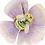 Thumbnail: Bombus pascuorum Geranium x oxonianum