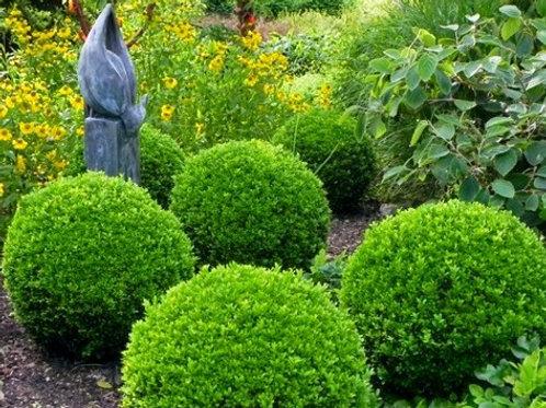 Understanding The Basics of Garden Design Workshop 3 hours