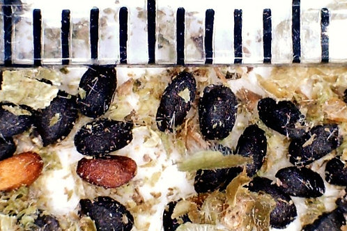 Online Seed Sowing Workshop