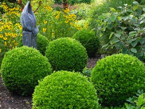 Online Garden Design Workshop