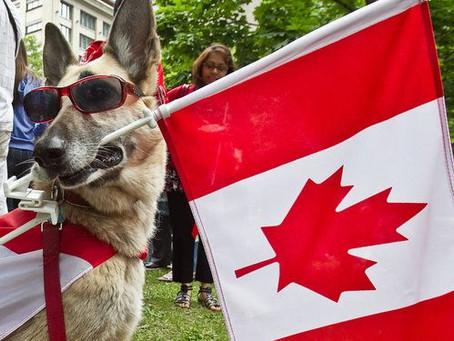 Kitchener prepara festa especial para cães nos 150 anos do Canadá