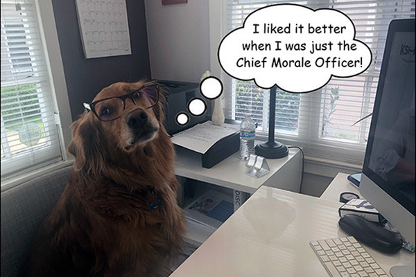 Joy Chief Morale Officer