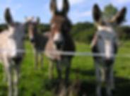 ânes.jpg
