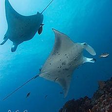Dive Trip Singapore Dive Travel Singapore Southeast Asia Dive Travel Fun Dive World Dive Dive Expedition