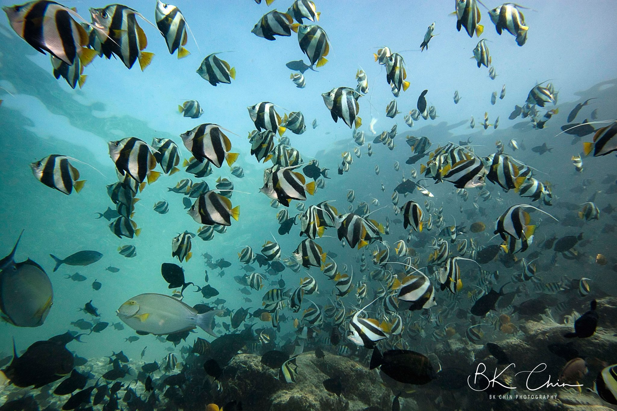 Maldives Fish Tank