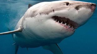 Δικαστής Καρχαρίας - Η κοινωνική ανθρωποφαγία