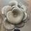 Thumbnail: - Silver Oyster Mushroom (Pleurotus Ostreatus)