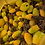Thumbnail: - Barrel Fruit (Echino. & Feroca.)