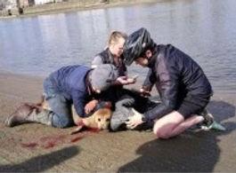 injured seal.jpg