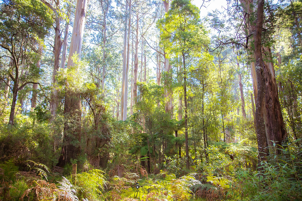 Forest Therapy exposes us to phytoncides released by trees
