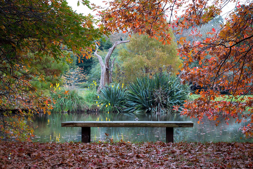 A lake framed by trees showing off autumn colours. A cormorant bird in the background.