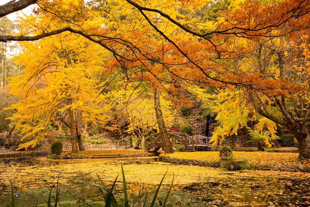 Orange and gold foliage at Alfred Nicholas Memorial Garden