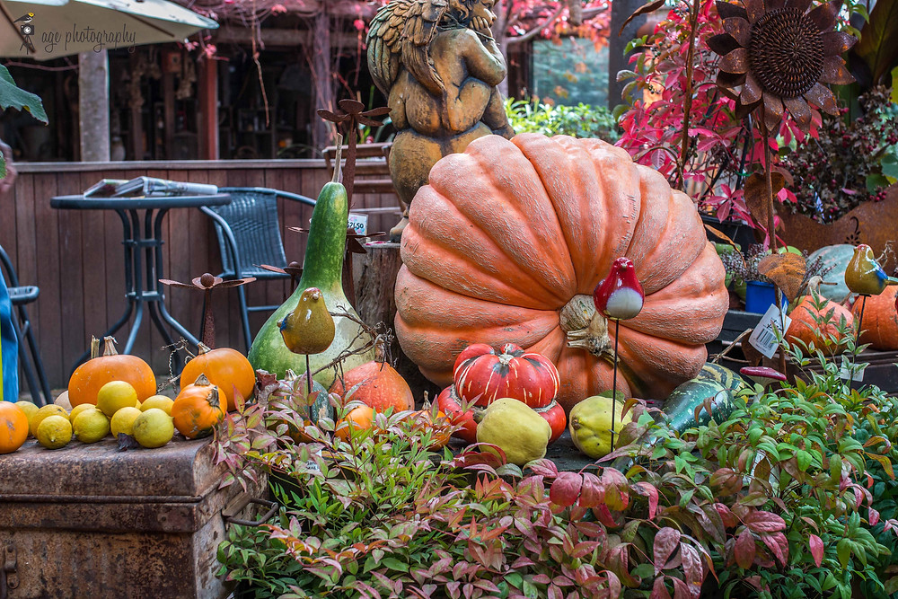 Squashes and gourds on display at Alowyn Gardens