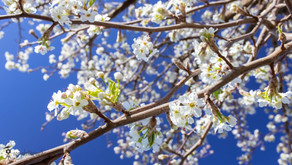 Ichigo ichie: Appreciating the fleeting and unrepeatable moments in nature