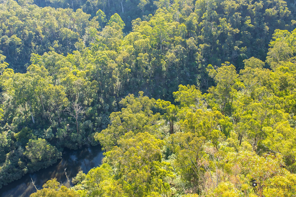 View of Tyers River Gorge from Peterson's Lookout
