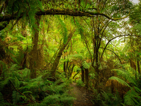 Why winter is the perfect time to explore our rainforests