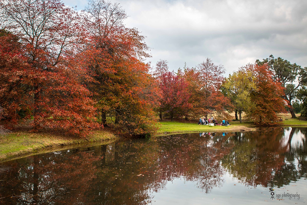 Autumn colours on display on a stretch of trees lined up along a lake