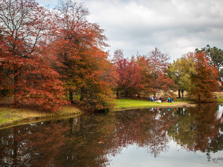 Where to enjoy autumn colours in Melbourne
