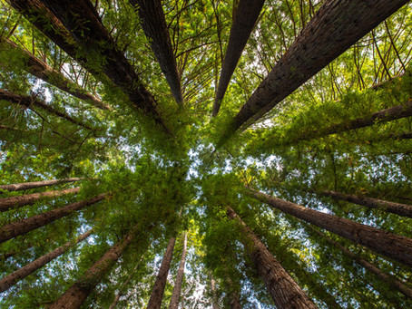 Forest Therapy — What is it and what are its benefits?