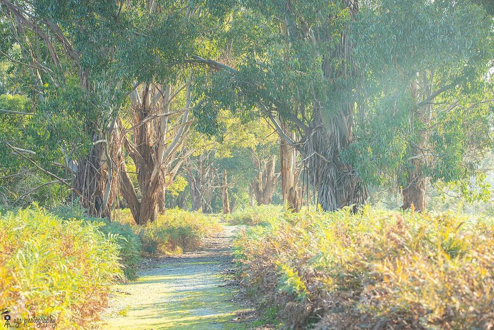 A walking path in a small bush