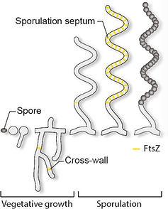 life-cycle+microscopy.jpg