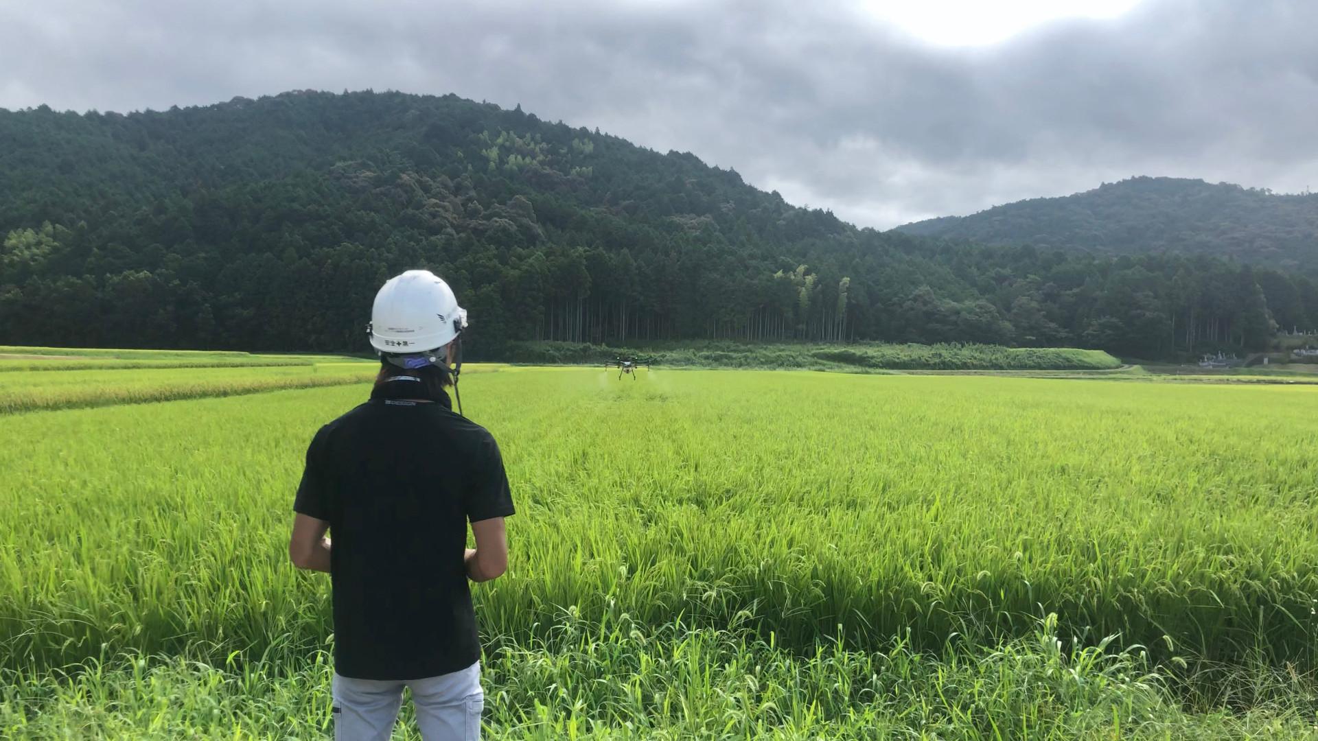 夏季水稲防除