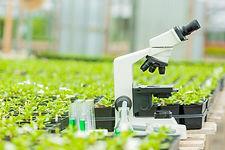microscope-plants_0.jpg