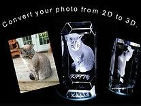 kitty no website.jpg